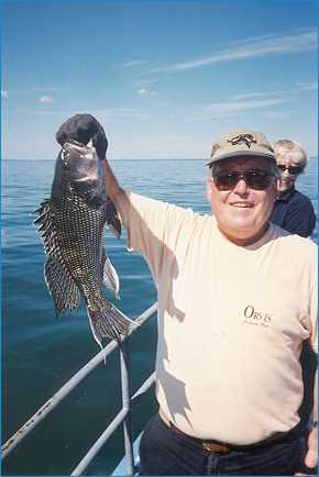 Caught on MV Skipper: Black sea bass!